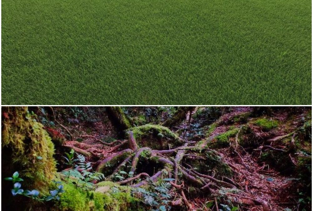 Is your church a lawn or a forest floor?